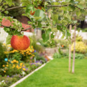 Gartengestaltung Taunus